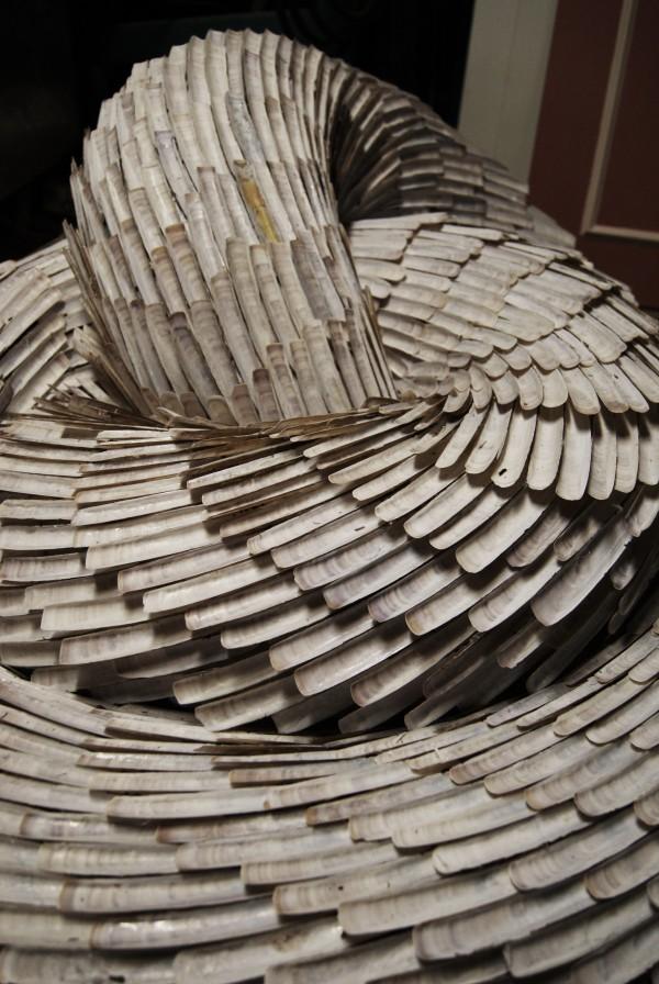 2011 - Shells